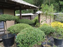 Japanese Garden Plants Plants For Japanese Gardens Build A Japanese Garden Uk