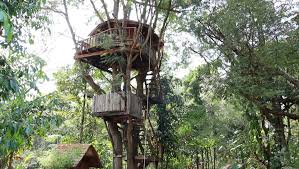 House House In Thailand Inspirations House In Thailand Design Treehouse In Thailand