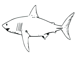coloring page shark great white shark coloring page great white shark coloring pages great white shark