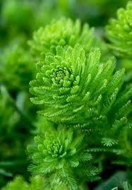 Bildergebnis für kostenlose Bilder zu Algen