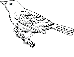Realistic Bird Coloring Pages Bird Coloring Pages Free Printable