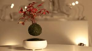a floating bonsai tree that defies gravity with magnets codesign business design bonsai tree office
