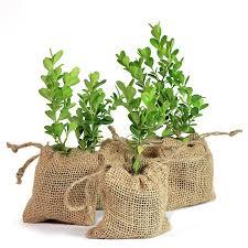Boxwood Tree Plant Favor Burlap Pouch