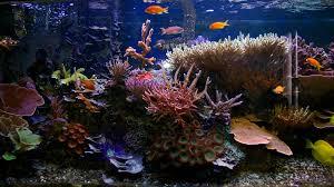 tropical aquarium wallpaper. Simple Aquarium Tropical Fish Tank Wallpaper Inside Aquarium Wallpaper Glass Fish Tanks