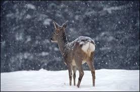 Znalezione obrazy dla zapytania Dolina Kościeliska zdjęcia zimą