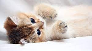 8K Cat Wallpapers - Top Free 8K Cat ...