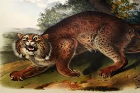the fantastic beasts of john james audubon s little known book on mammals