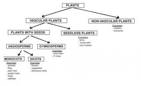 Classifying Plants Animals A Christian Middle School