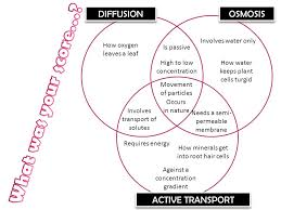 Venn Diagram Of Diffusion Osmosis And Active Transport Osmosis Vs Diffusion Venn Diagram Magdalene Project Org