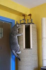 Diy cat playhouse Diy Cardboard Cat Detoxcapsulasclub Cat Play Structures Overhead Cat Playground Room Goldtatze Cool