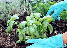 grow your own food veggies fruits