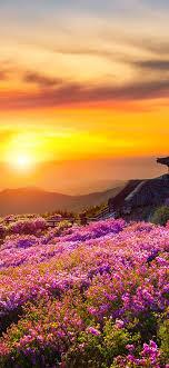 Flower Mountain Nature Landscape Sunset ...