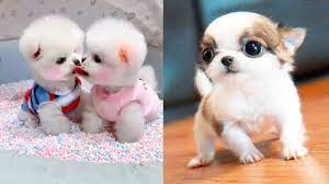 Baby Dogs - Cute and Funny Dog Videos ...