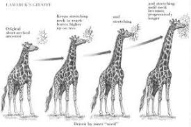 what are the major differences between darwin and lamarck s  charles darwin and lamarck s theories of evolution