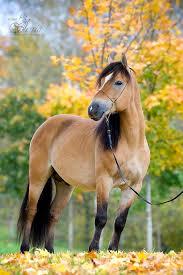 Résultat de recherche d'images pour 'photo de chevaux'
