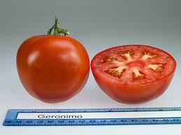 Tomato Varieties Rutgers Njaes