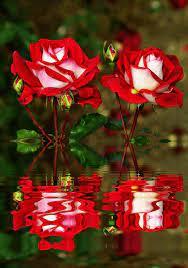 Beautiful Flowers Gif Wallpaper ...