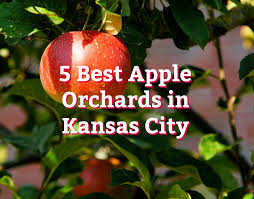 Cherries How To Plant Grow And Harvest Cherries  The Old Fruit Trees In Kansas