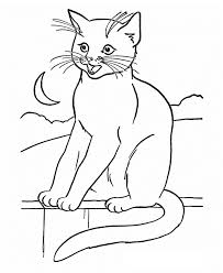 Blaze The Cat Coloring Pages Blaze The Cat Coloring Pages Radiokotha