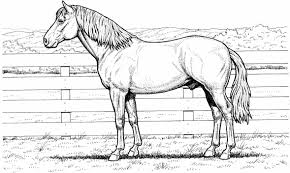 Small Picture For Kids And All Ages Stallion Page Free Printable Horse Horse