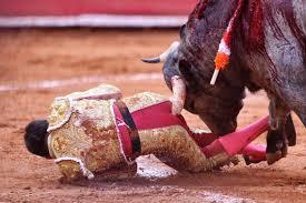 Bull gores 11 inch horn up matador s butt New York Post