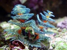 14 Fun Facts About Marine Bristle Worms  Science  SmithsonianChristmas Tree Worm Facts