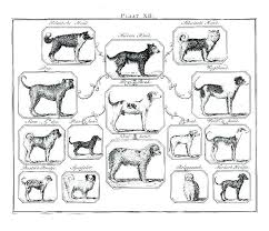 Ancestry Diagram Dog Ancestry Chart Animal Species Diagram Breed Clicktips Info