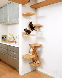 Corner Cat Shelves Take The Time To Build Cat Shelves Fun For Both You And Your Pet 11