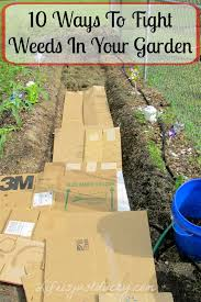 how to kill weeds in garden. kill weeds 4 how to in garden i