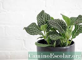 Някои обикновени стайни растения могат да помогнат в това: Cvetni Stajni Rasteniya Koito Ne Se Otglezhdat Trudno Domakinska Rabota 2021