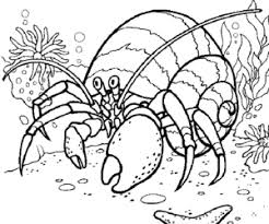 Small Picture hermit crab coloring page coloring book Coloring Book Ideas
