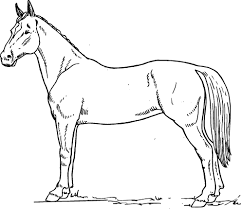 Small Picture Horse Coloring Book Pages Coloring Pages