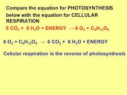 compare and contrast respiration and photosynthesis gcse