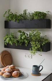 indoor kitchen garden. Indoor Herb Garden In Unused Spaces #smallgardenideas #sgi More Kitchen