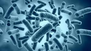 О дружбе бактерий и человека РИА Новости   архивное фото Бактерии архивное фото