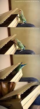 167 Best Dang I Love Birds Images On Pinterest Animals Funny