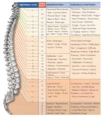 Nerve Root Innervation Chart Spinal Nerve Roots Chart Nerve