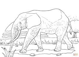 Small Picture African Forest Elephant coloring page Free Printable Coloring Pages