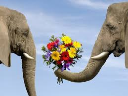 Image result for animals and flowers