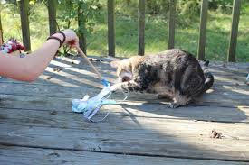 40 diy upcycled cat and dog toys