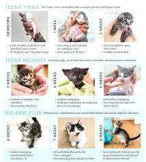 Cat Stool Chart Kitten Diarrhea Color Chart Bedowntowndaytona Com