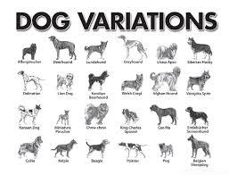 Dog Scientific Classification Chart