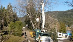 locally owned and family operated robs tree care has been serving kelowna the surrounding okanagan area for more than 15 years now robs tree service o15