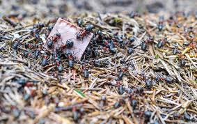 Bildergebnis für ameisenhaufen