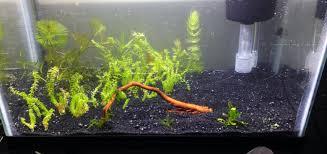 Small Fish Bowl Decorations Decorating Eye Catching Petco Aquarium Decor For Your Fish 46