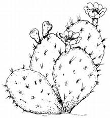 Small Picture Prickly Pear Cactus coloring page from Cactus category Select