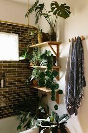 Use The Shelf Bathroom Plants