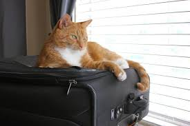 boarding cats while on vacation. Fine Boarding Admiral Jules Vern Von Picklebottoms III On Boarding Cats While Vacation N
