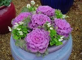 Fall Container Vegetable Garden Ideas  Home Outdoor DecorationContainer Garden Ideas Uk