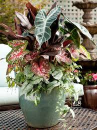 12 Beautiful Container Gardening Ideas For ShadeContainer Garden Ideas For Shade